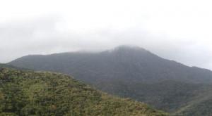 La montaña de la Palma Real con ambiente de bosque nublado tropical, ubicada en el límite Sur.